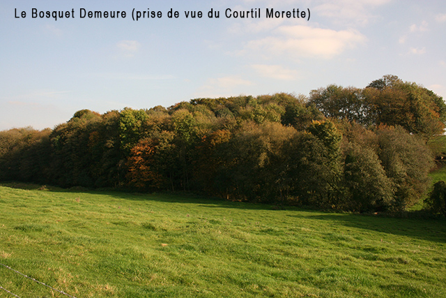 Le bosquet Demeure 640