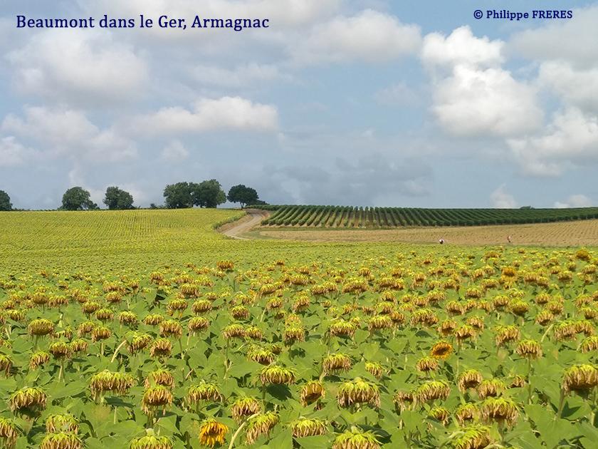Beaumont dans le Gers, Armagnac 840