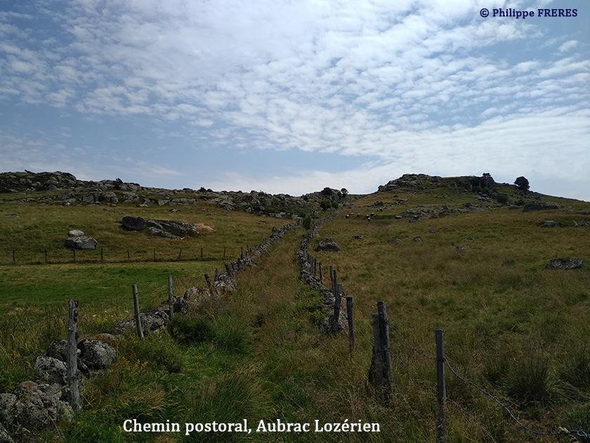 Chemin pastoral, Aubrac Lozérien 840
